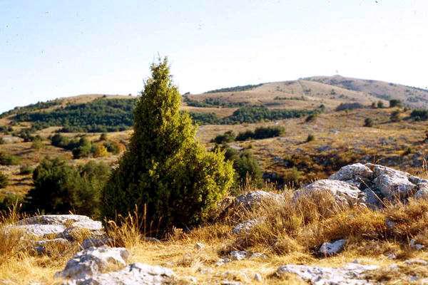 20010921-buschvorberg